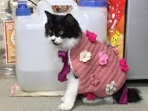 ピンク猫パにおん