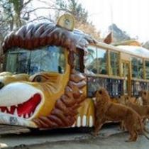 群馬サファリパーク エサやりバス ドキドキします!
