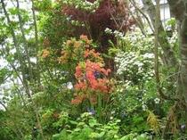 花と緑に囲まれた「ペンション青葉」です②