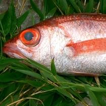 【魚】ノドクロ02