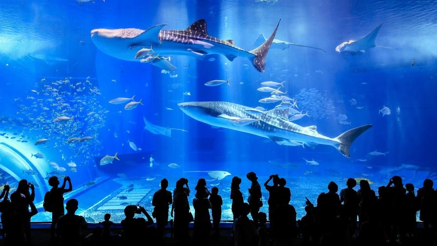 【楽天スーパーSALE】沖縄美ら海水族館に行ってきたらい〜さ〜♪<朝食付き>