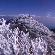 <雲仙ロープウェイ・冬>冬の絶景!山の木々に霧が凍りつく霧氷は必見(見頃:12月~3月)