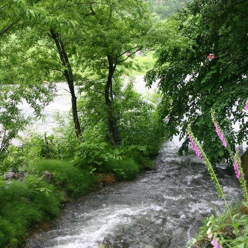 宿のすぐそばに川が流れています・・。