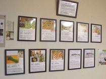 当館でお出ししている山菜の展示