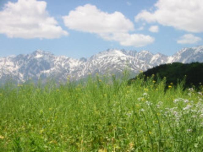 草原から望む北アルプス