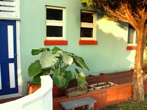 カラフルな色の外壁と植栽