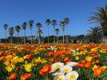 南房総の春はお花摘み♪館山ファミリーパークのチケット付きプラン