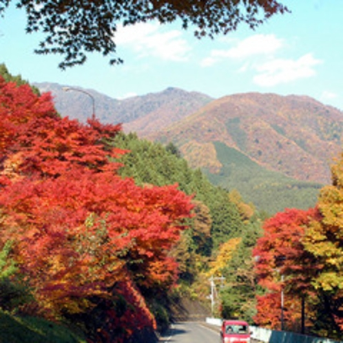 四万温泉全体が紅葉の見頃