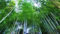 【竹林】敷地内にそびえる孟宗竹