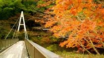 【秋】吊橋からの眺め