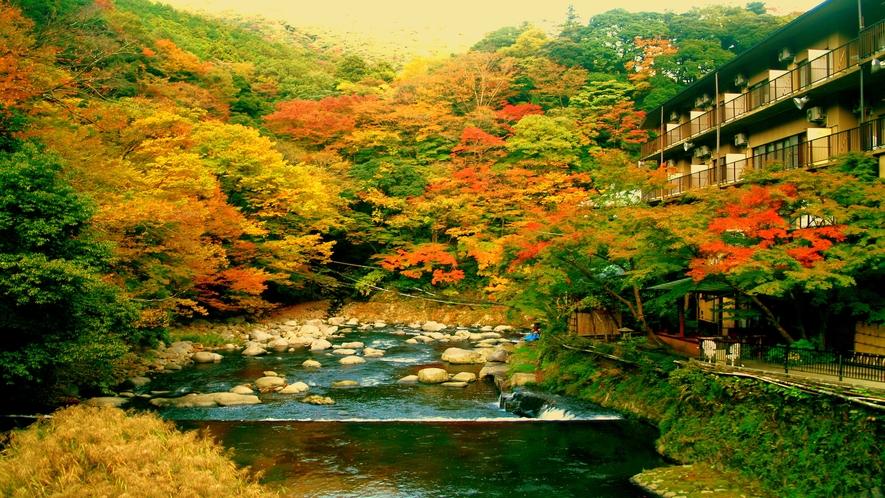 【秋】渓流沿い吊橋から眺める紅葉