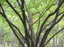 自然がいっぱいの周辺の林