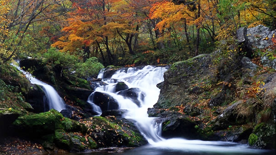 *【逢滝】新緑・紅葉には是非訪れていただきたいオススメスポット!(車で約3分)