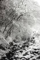 目の前の川初雪2016年1月18日