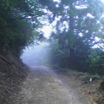 世界遺産にも登録された熊野古道