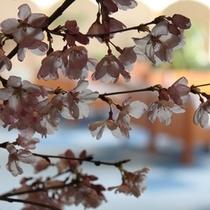 ロビーの桜