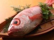 高級魚:ノドグロ
