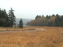 秋の大江湿原