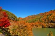 もみじ湖(箕輪ダム) (観光情報!)