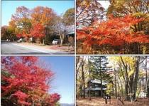 紅葉別荘周辺