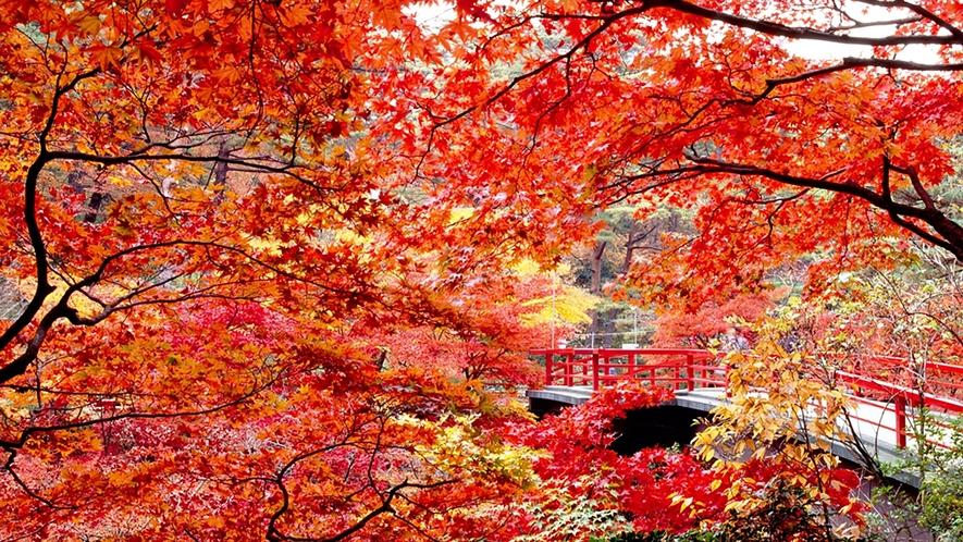 当館からお車で約10分♪弥彦公園紅葉 もみじ谷(イメージ)