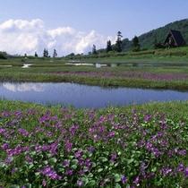 『高谷池湿原・天狗の庭』≪当館より約160分≫