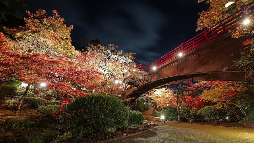 当館からお車で約10分♪弥彦公園もみじ谷 紅葉ライトアップ(イメージ)