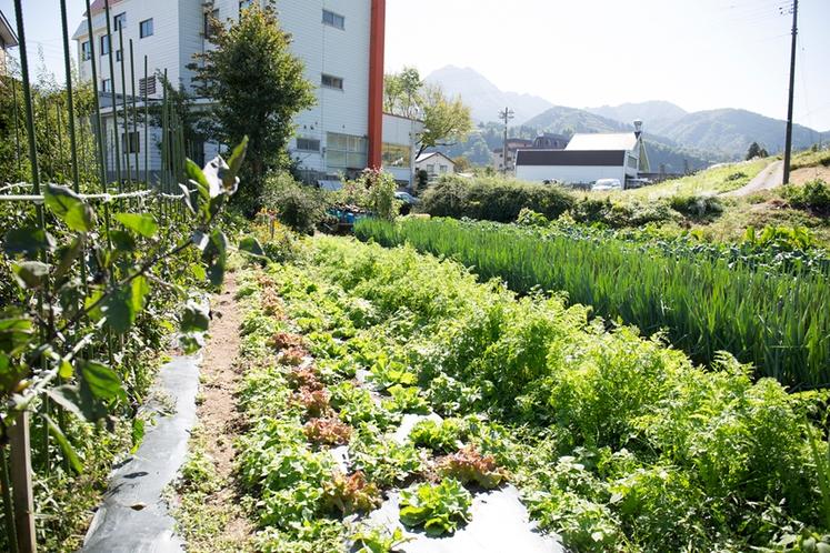 自家菜園_ペンションのすぐ近くに畑があります