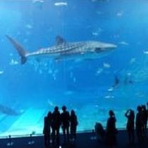 その壮大なスケールは沖縄が誇る観光名所のひとつです