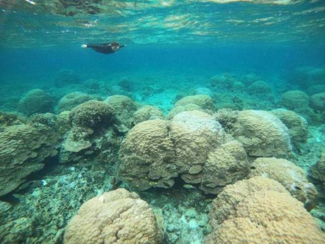 海底のサンゴ