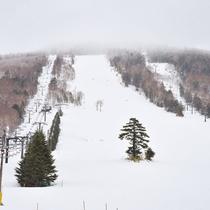 **【一の瀬スキー場】志賀高原の上質な雪で初心者から上級者まで思う存分ウインタースポーツを満喫!