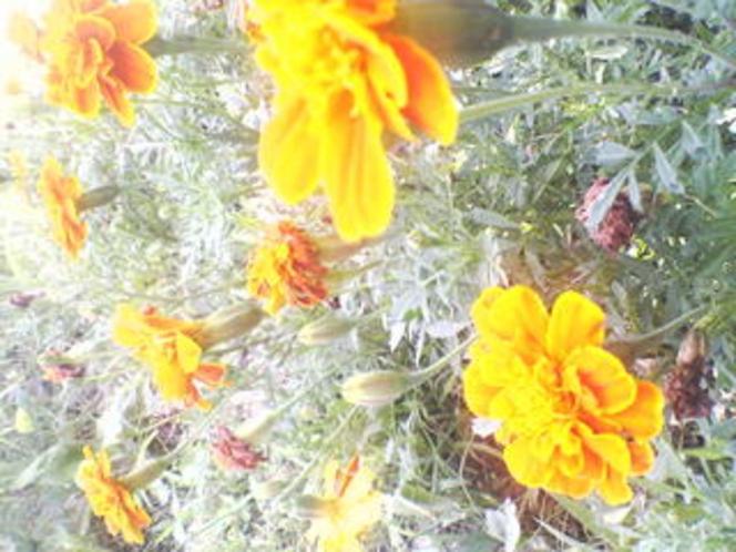 あぷり周辺草花