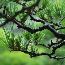 しっとりと降る雨が新緑の力強さを引き立てます。
