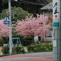 米屋の近所の公園の桜