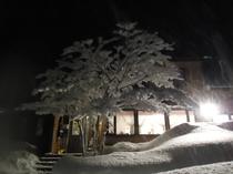 雪のハーティ