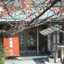 ■八重桜玄関