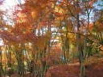 自然公園 紅葉