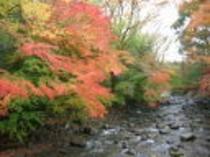 竹林 紅葉