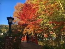 秋の修善寺