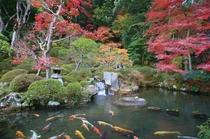 修禅寺「方丈庭園」特別拝観