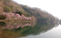 桜と中綱湖