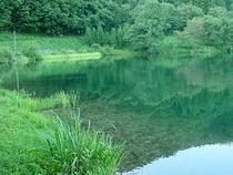 緑と溶込む中綱湖