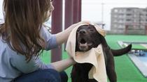 【わんちゃん専用温水プール】わんちゃん用のバスタオルもご用意してます