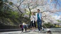 伊豆高原の桜並木