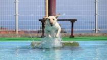 【わんちゃん専用プール】大喜びでプールにザブン♪