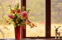 ダイニング出窓のダリア
