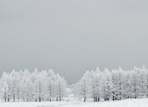 霧ヶ峰の霧氷