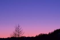 夕方の木々のシルエット