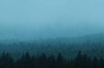 長和町の唐松の防風林