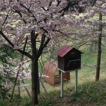 【遊び場】 よませどんぐりの森公園(春)